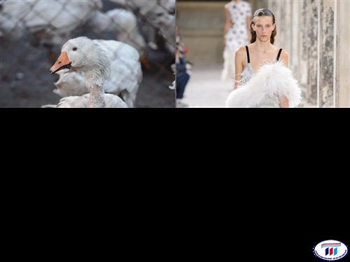 Câu chuyện đạo đức trong kinh doanh thời trang nhìn từ phong trào tẩy chay
